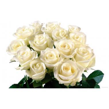 Роза Белая 50 см (Россия)