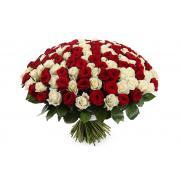 101 роза  60 см белый и красный